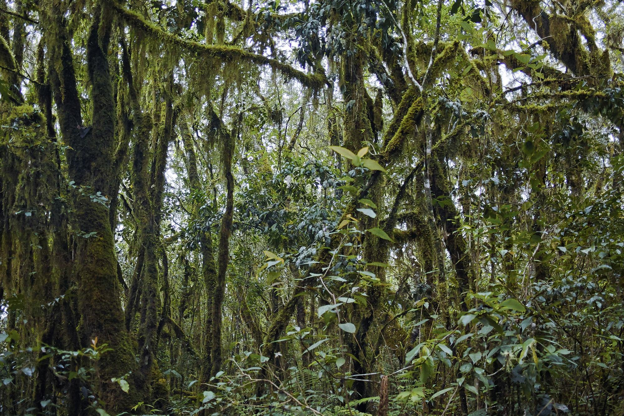 Karthala rainforest