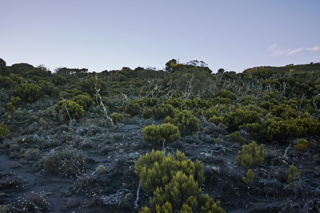 A few meters below the rim of the caldera of the Mount Karthala