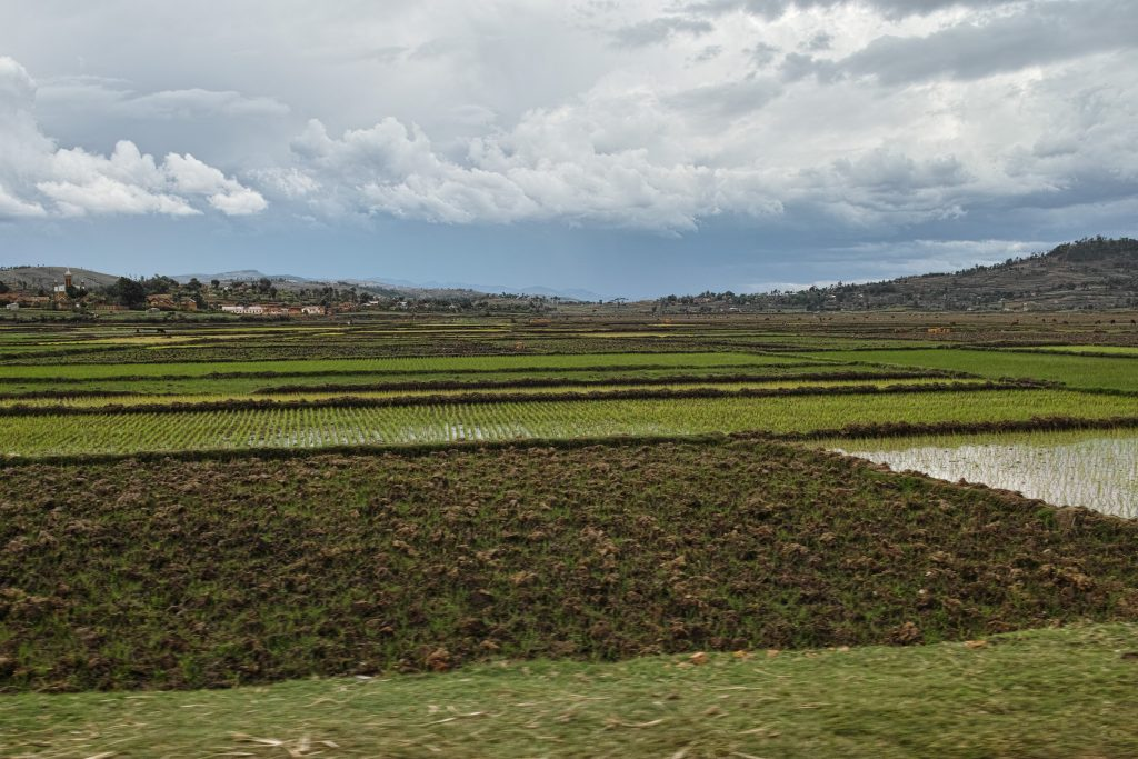 Rice Fields in the highlands