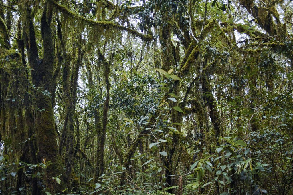 Rainforest on the slopes of the Karthala Mountain, Grand Comore