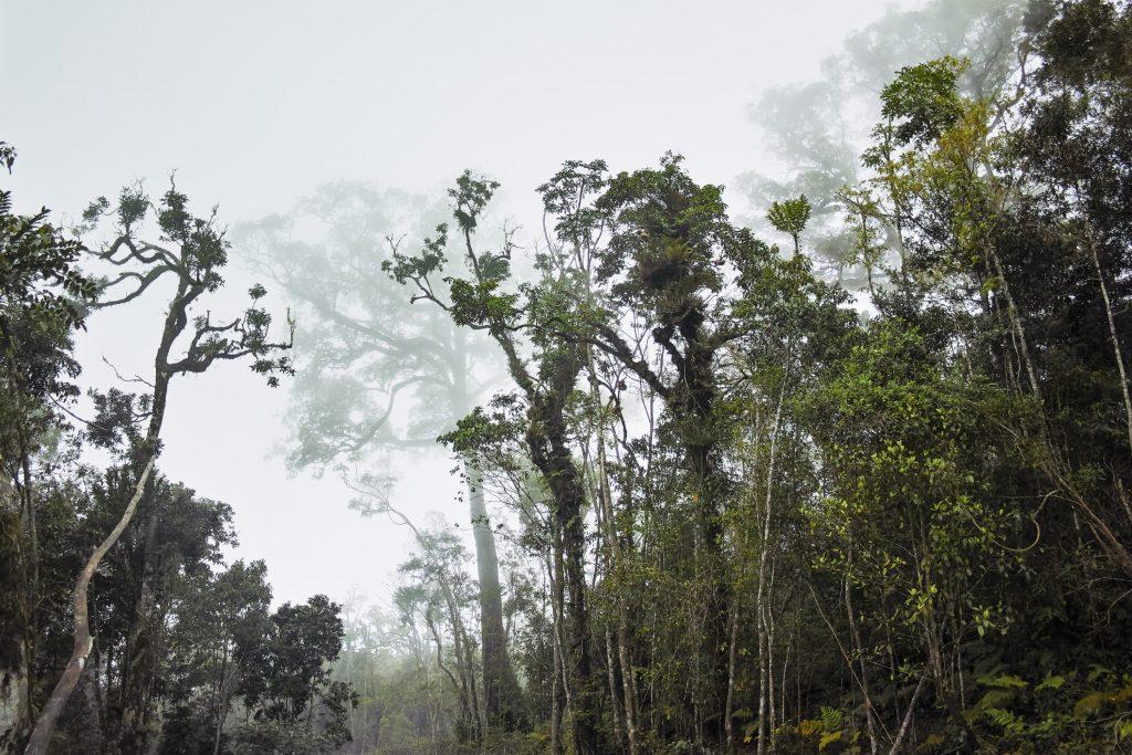 Rainforest on the slopes of the Karthala Mountain, Grande Comore