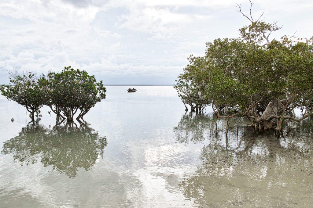 Mangroves in the Pemba bay at the Pemba Dive and Bush Camp