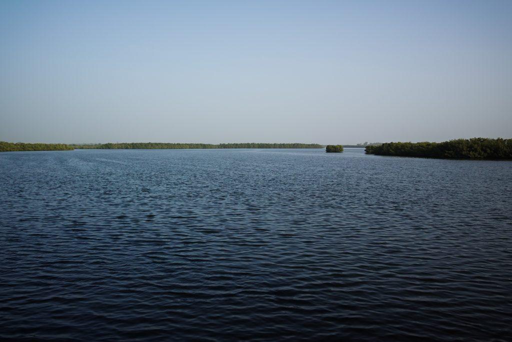 Mangroves in the Saloum Delta